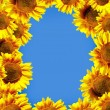 Sun flowers over blue sky — Stock Photo