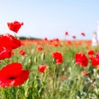 Mother and daughter walking in poppy field — Stock Photo #12615467