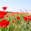 Mother and daughter walking in poppy field — Stock Photo