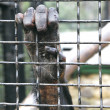 Monkey hand grabbing metal bars — Stockfoto