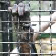 Monkey hand grabbing metal bars — Stock fotografie