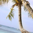 Palm tree on sand beach — Stock Photo