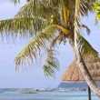 tropical beach — Stock Photo #12617970