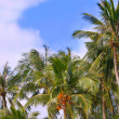 Palmtrees on sky background — Stock Photo
