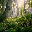 Morning in forest — Stock Photo