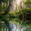 Stock Photo: Morning in forest