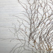 Branches on grey wall background - Foto Stock