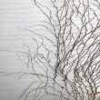 Branches on grey wall background - Foto de Stock  