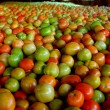 Stock Photo: Plenty of tomatoes