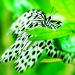 White butterfly on green leaf — Stock Photo