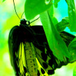 Yellow butterfly on green leaf — Stock Photo