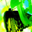 Yellow butterfly on green leaf - Stock Photo