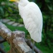 White egret sitting on fence - Stock Photo