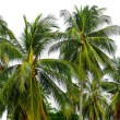 Lots of palm trees isolated over white — Stock Photo