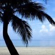 Palm tree silhouette on beach - Stock Photo