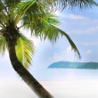 Foto Stock: Palm tree on sand beach in tropics