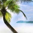 Palm tree on sand beach in tropics — Stock fotografie #12619303