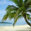 Palm tree on tropical beach - Stock Photo