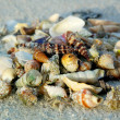 Different seashells on sand beach — Stock Photo