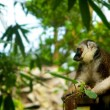 Monkey in zoo - Stockfoto