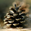 Pine cone - Stock Photo