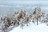 Winter forest behind frozen window — Stock Photo