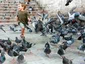 Happy boy running among pigeons — Stock Photo