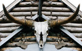 Buffalo skull — Stock Photo
