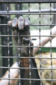 Monkey hand grabbing metal bars — Stock Photo