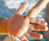 Lady bug on baby's palm — Stock Photo