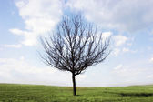Alone tree on gree grass — Stock Photo