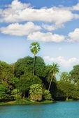 Eiland in de tropen — Stockfoto