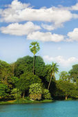 Isola nei tropici — Foto Stock