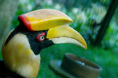 Head of hornbill — Stock Photo