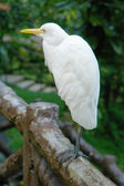 White egret sitting on fence — Stock Photo