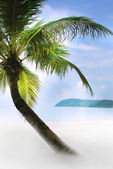 Palm tree on sand beach in tropics — Stok fotoğraf