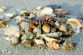 Verschillende schelpen op zand strand — Stockfoto