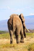 Bye Bye Elephant — Stock Photo