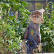 Stockfoto: Scarecrow in garden