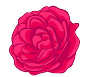 Pink rose isolated on white. floral design element — Stock Vector