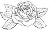 Beautiful rose in the style of black and white engraving. — Stock Vector