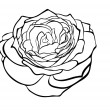 Beautiful rose in the style of black and white engraving. — Stock Vector #28460465