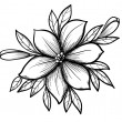 Beautiful graphic drawing Lily branch with leaves and buds of the flowers. — Stock Vector