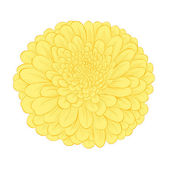 Beautiful yellow flower isolated on white background — ストックベクタ