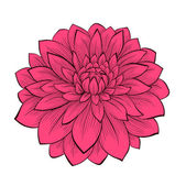 Beautiful flower Dahlia drawn in graphical style contours and lines, isolated on white background — Stock Vector