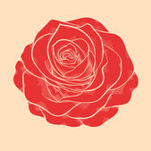 Beautiful red rose in a hand-drawn graphic style in vintage colors — Stock Vector
