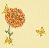 Flor del crisantemo hermosa con el vuelo de las mariposas — Vector de stock