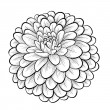 Beautiful monochrome black and white dahlia flower isolated on white background — Stock Vector