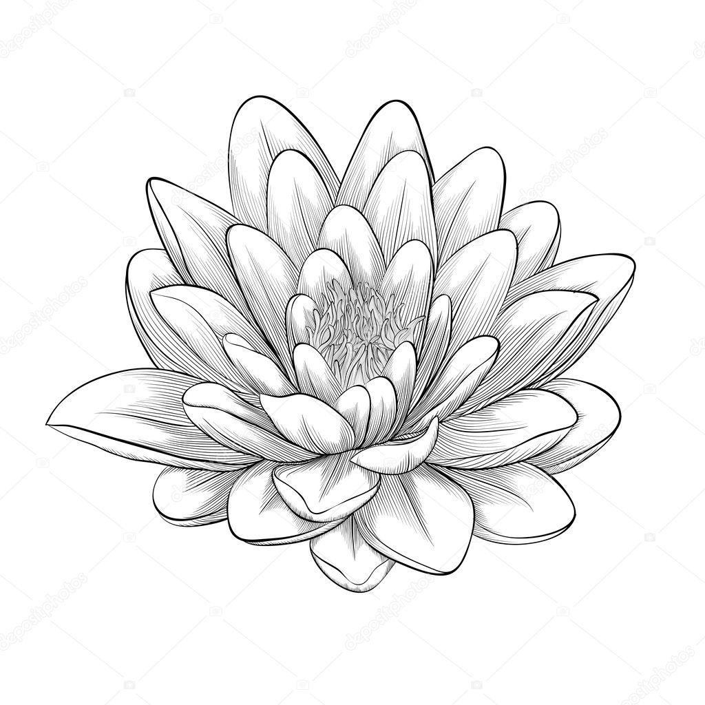 Lotus flower tattoo drawing glaryyears 3 paires mehndi henn lotus flower tattoo drawing download izmirmasajfo