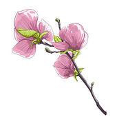 Güzel izole dal çiçek açması Manolya ağacı. — Stok Vektör